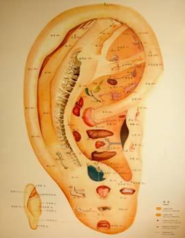 Abb. 2: Ohrkarte des Zentrums für Traditionelle Chinesische und Integrative Medizin