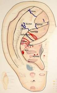 Abb. 3: Links sichtbare Gefäße in den Bereichen Schulter, Halswirbelsäule (HWS), Brustwirbelsäule (BWS), Ellenbogen und das sog. Immunologische Gefäß