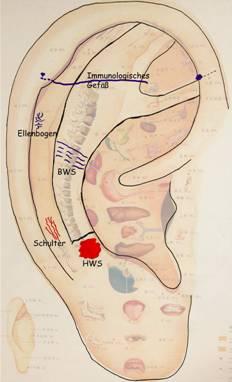 Abb. 4: Rechts sichtbare Gefäße in den Bereichen Knie, Lendenwirbelsäule (LWS) / Becken, Ischias, Innere Organe
